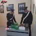 Bitonto e Terlizzi (Ba). Maxi sequestro di droga dei carabinieri della compagnia di molfetta. Un arresto