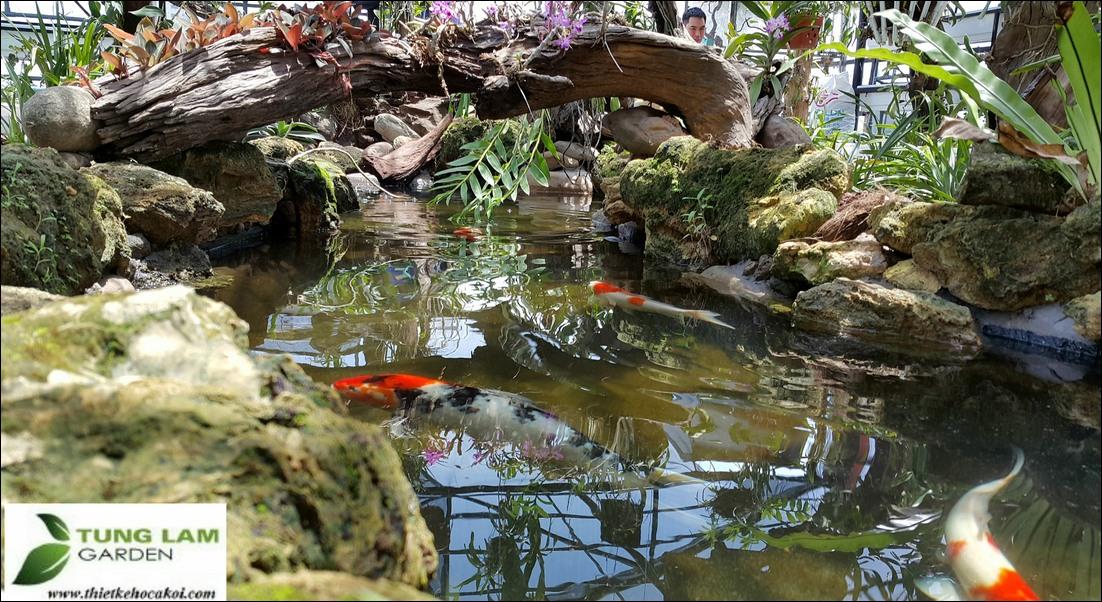 Hồ cá Koi đẹp, hồ cá koi nhiệt đới, cải tạo hồ cá koi