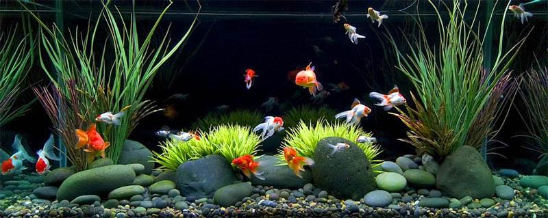 Desain Aquarium Ikan Koki Model Rumah Minimalis 2020