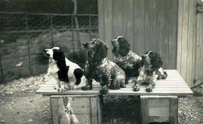 Rhyl kennels, dogs