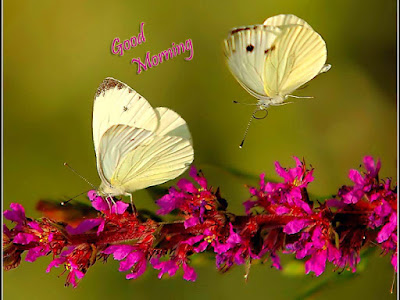 good-morning-butter-fly-wallpapers-images