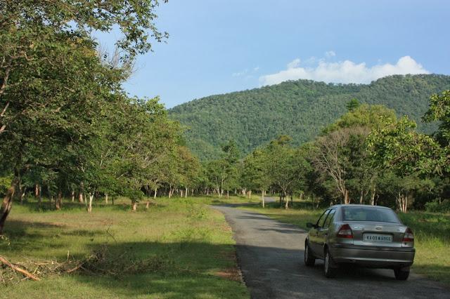 Lush vegetation between Hondarbalu check post and K Gudi inside BRT tiger reserve in Karnataka
