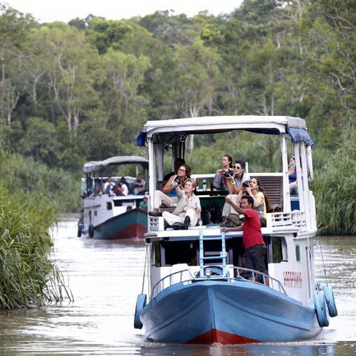 Tinuku Travel Tanjung Puting National Park ship cruises watch Borneon orangutans and proboscis monkeys live in wild