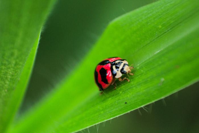 نوع من الحشرات