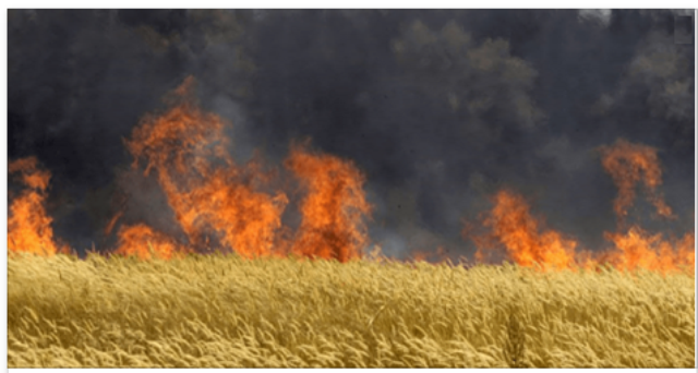 monsanto feild burned down by public in hungary