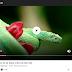 Youtube ve diğer video sitelerinden ekran görüntüsü alma