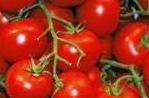 untuk posting khasiat dan manfaat tomat