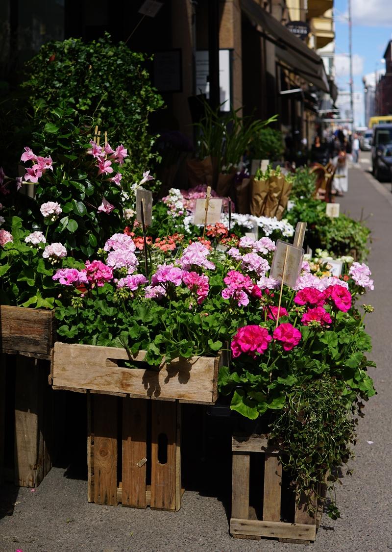 kevät, kukkakauppa, kevätkukat