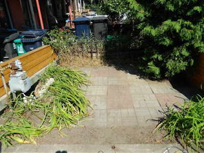 Little Portugal summer garden cleanup by Paul Jung Gardening Services Toronto after