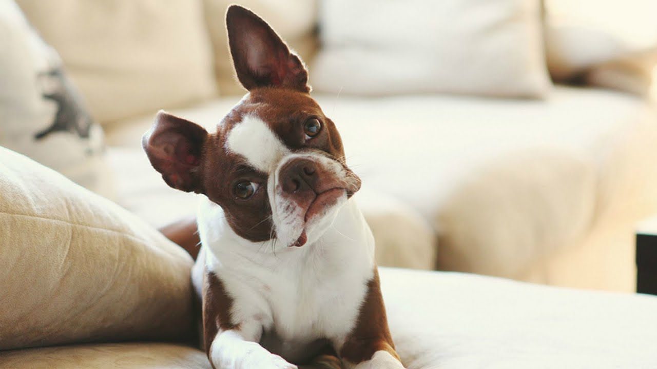 the 10 best apartment dogs - luv my dogs