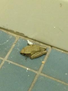 Terror in the toilet