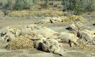 Προς υλοποίηση από την Περιφέρεια Ηπείρου το πρόγραμμα διαχείρισης νεκρών ζώων