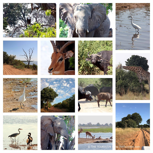 Eagles, birds, elephants, buffalo, sandy tracks in Chobe National Park in Botswana