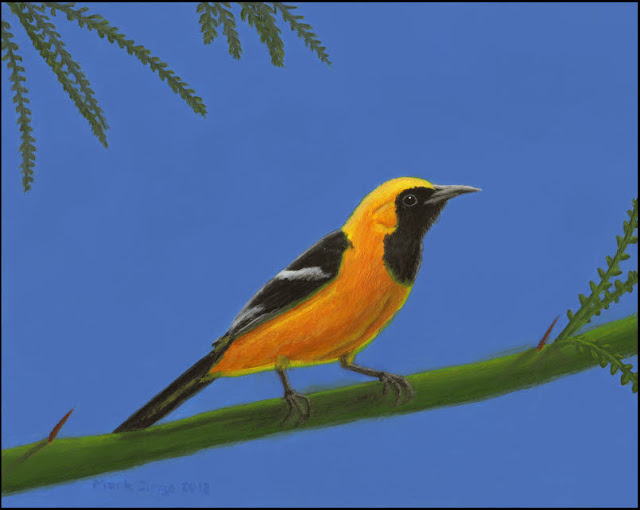 art,artwork,painting,bird,hooded oriole,oriole,desert,yellow,orange,black,blue sky,palo verde,tree