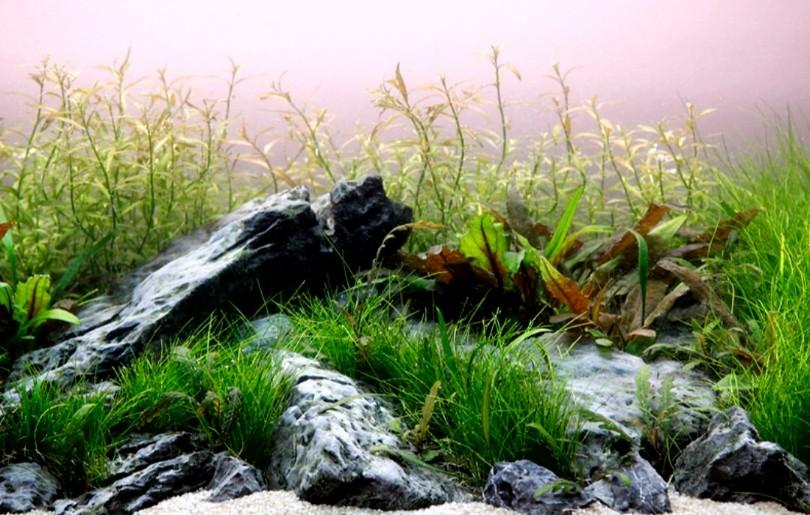 10 Model Tema Aquascape Terbaik Disertai Teladan Gambarnya ...