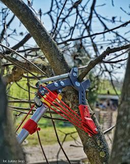 sekator linkowy do gałęzi