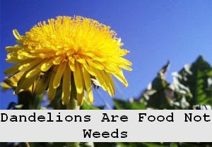 https://foreverhealthy.blogspot.com/2012/05/dandelions-are-food-not-weeds.html#more