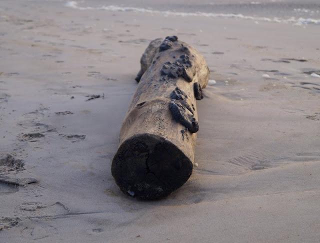 Wenn man Weihnachten ans Meer ginge. Manchmal ist der Weg zu Strand auch ein weg, um Weihnachten wieder zu finden. Ein Gedicht auf Küstenkidsunterwegs.