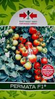 Benih,Permata, tomat, tahan virus,kuning, keriting, unggul, dataran rendah, tinggi, petani, Cap Panah Merah, Benih Permata, Tomat Permata Murah