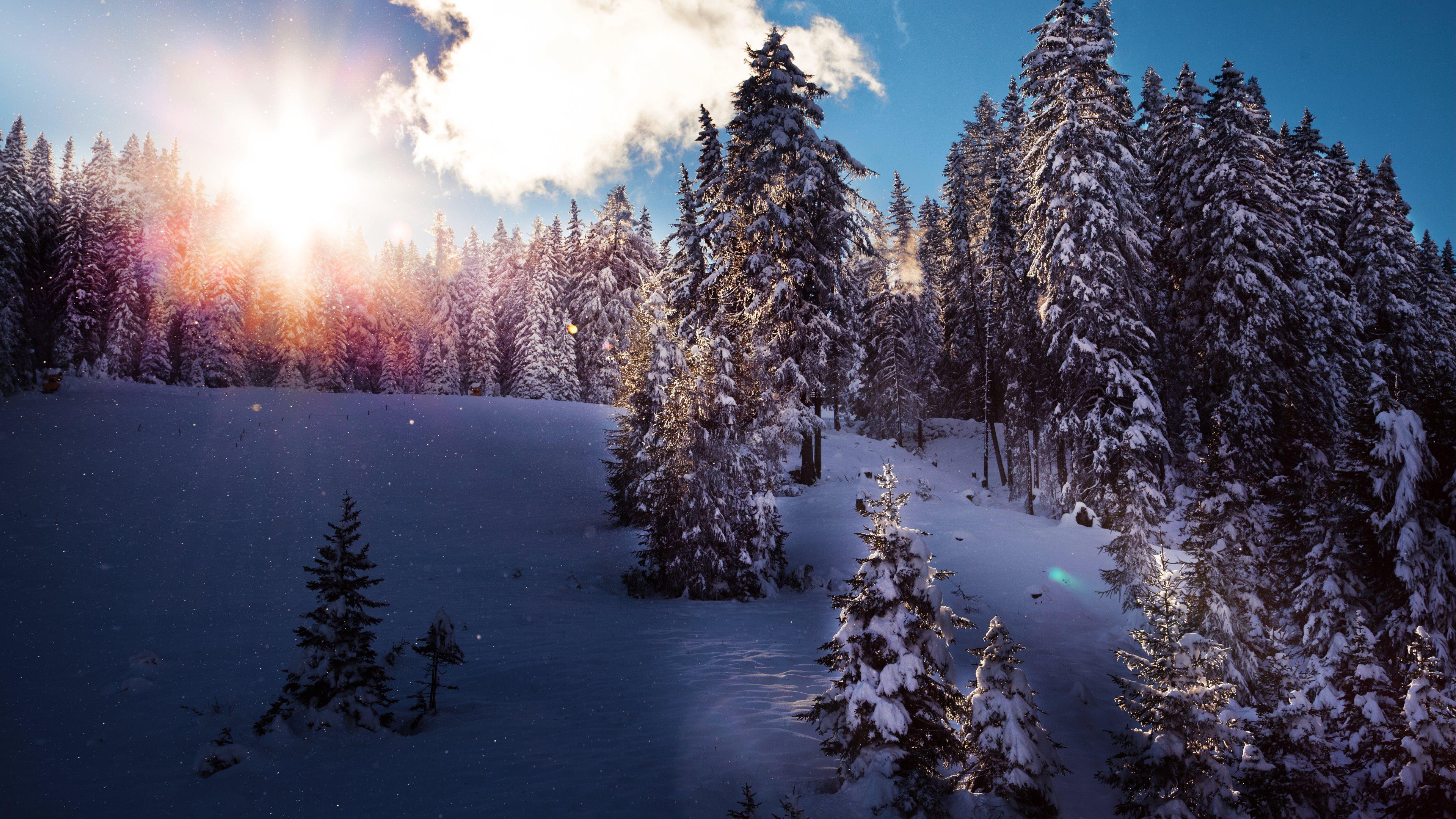 Winter iPhone Wallpaper  Design Freebies Pinterest Winter