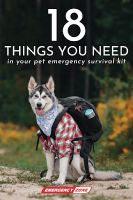 image of Husky breed dog wearing shirt and backpack