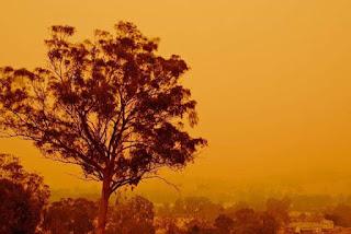 Australia vive la peor ola de calor de loa ultimos 50 años.