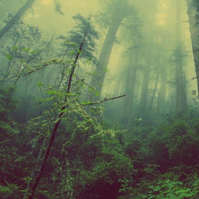 Rain Forest Wallpaper Engine