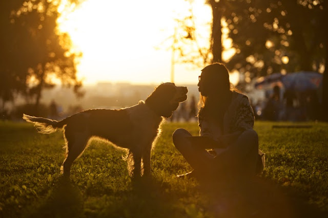 Silhouette of a happy dog and girl at sunset in autumn