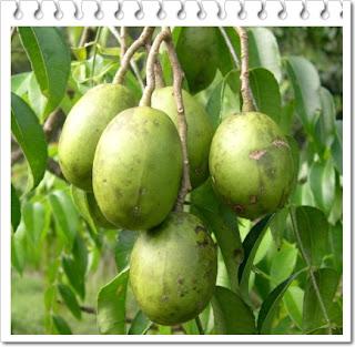 Manfaat buah kedondong untuk ibu hamil