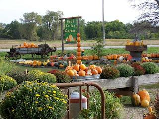 pumpkins and mums at Hawk Valley Garden pumpkin patch in Spencer, Iowa