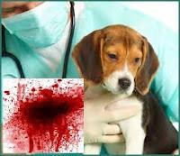 http://famigliagandini.blogspot.it/2014/10/veterinari-e-mafia.html