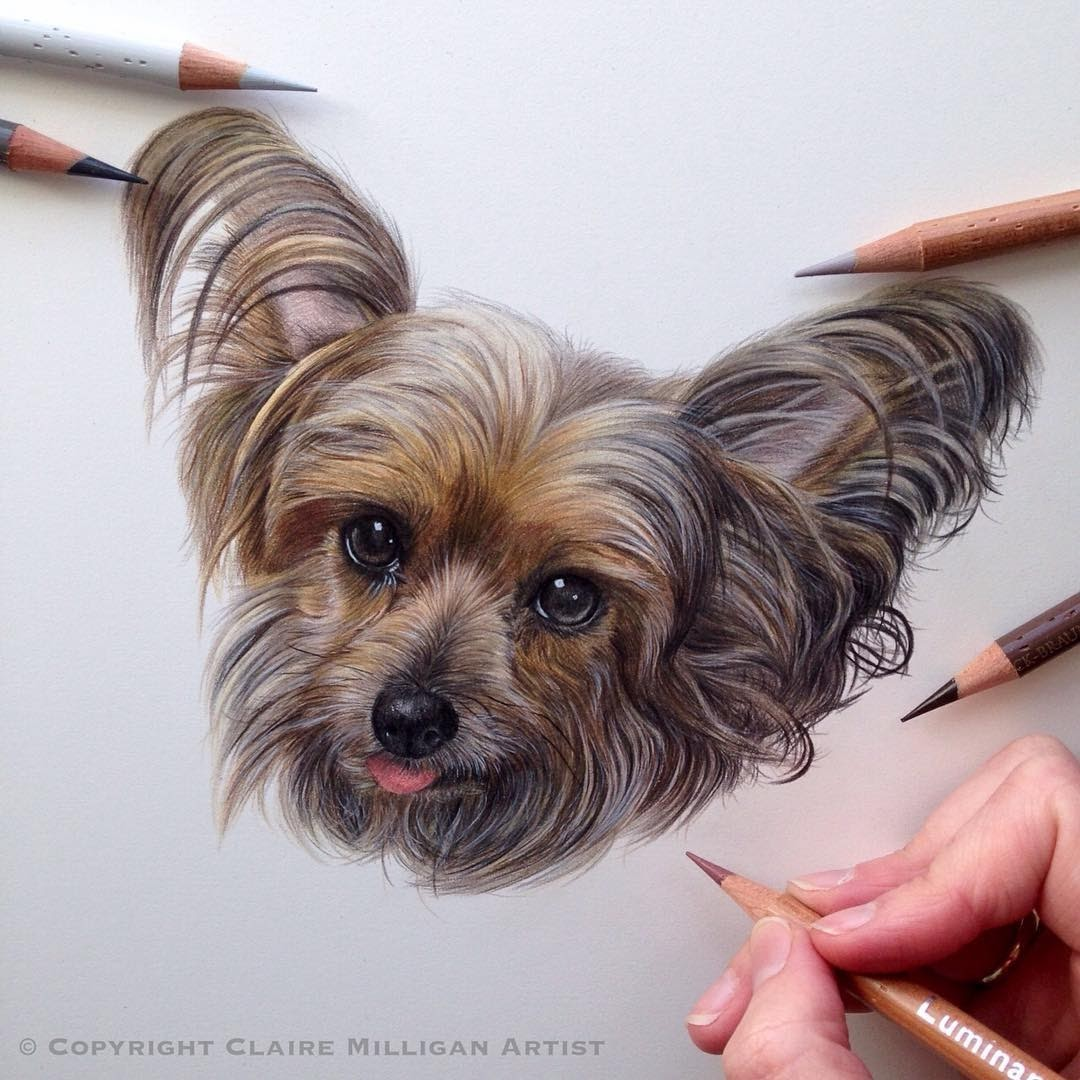 12-Yorkshire-Terrier-Chloe-Claire-Milligan-Cats-birds-and-Dogs-Realistic-Animal-Drawings-www-designstack-co