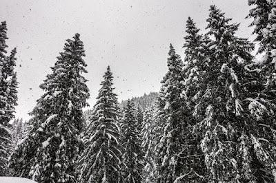 die schönsten fotografien von winter