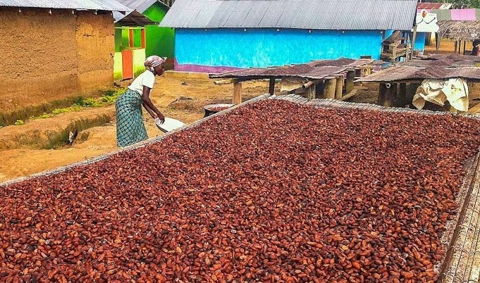 COCOBOD CEO earns Gh¢70,000 monthly salary