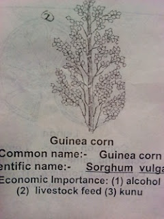 weeds and their botanical names