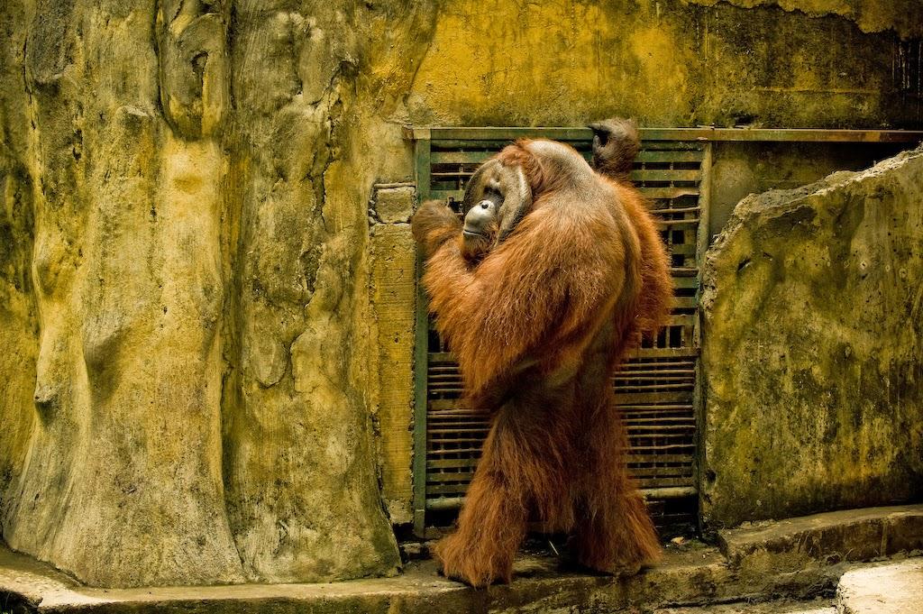 6 Top Parks in Bali - Bali Zoo ~ Bali Travel Guide