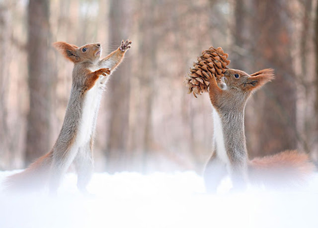 Funny And Lovely Photos of The Week