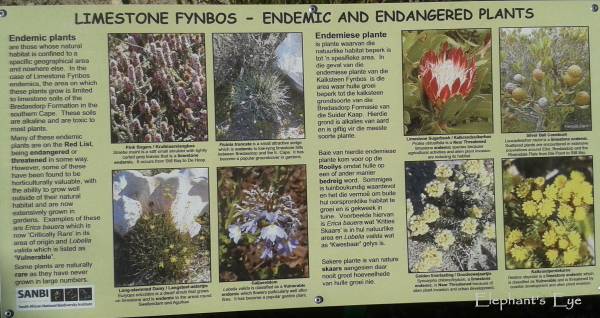 Limestone fynbos endemics