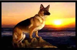 intelligent dogs dangerous