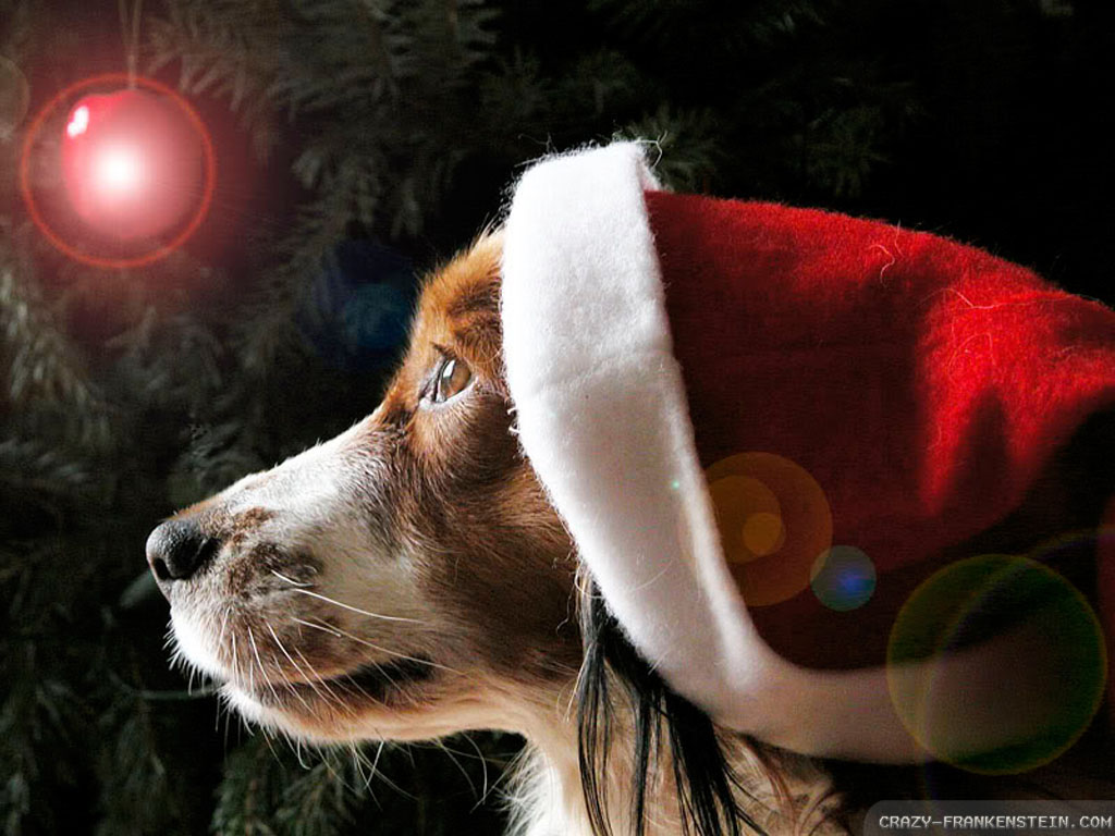 The Cat Christmas Puppies Hd Wallpapers