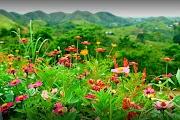 Ubay Green Park