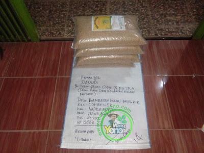 Benih Padi Pesanan    DANUDI Indramayu, Jabar.    Benih Sebelum di Packing.