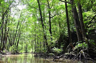 wisata mangrove dumai