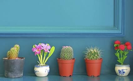 Where to put plants indoor plants arrangement ideas 7