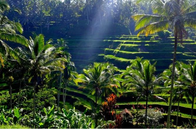 Wisata Menarik Desa Kendran Gianyar Desa Wisata Bali