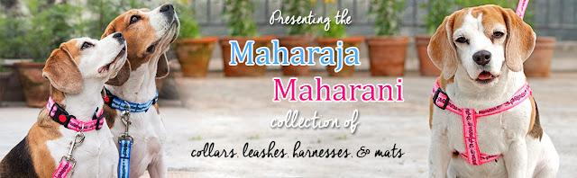 Maharaja Rani #thelifesway #photoyatra