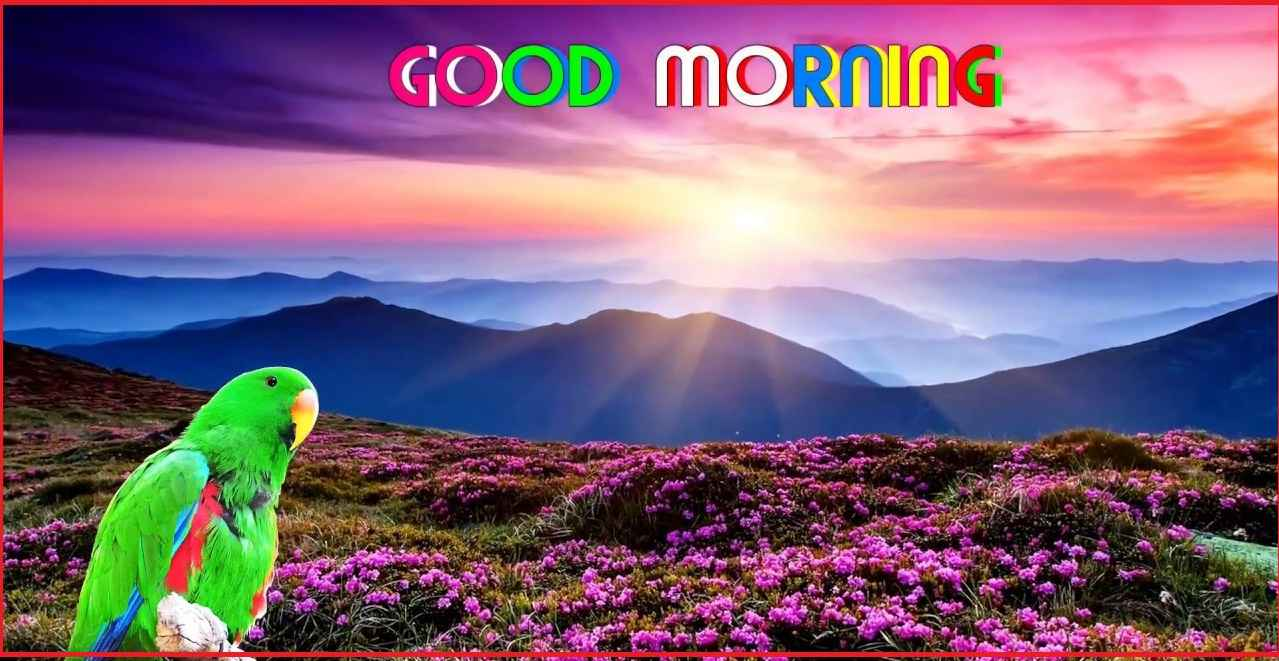Whatsapp Status In Hindi Hindi Status 251 Good Morning