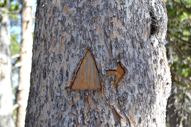 triangle and arrow cut in a tree