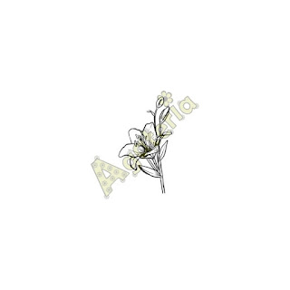 https://sklep.agateria.pl/pl/kwiaty/610-lilia-5902557823994.html