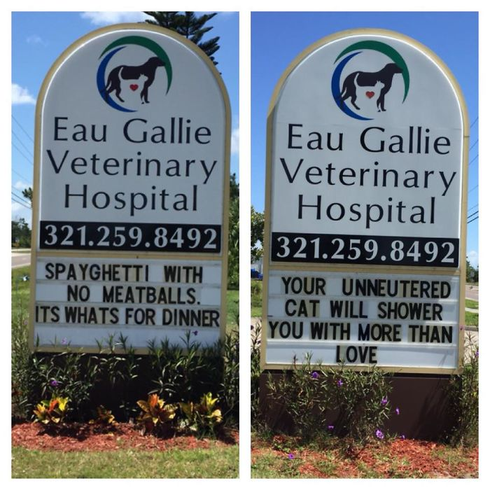30 Hilarious Cat Jokes Vet Clinics Put Up On Their Signs